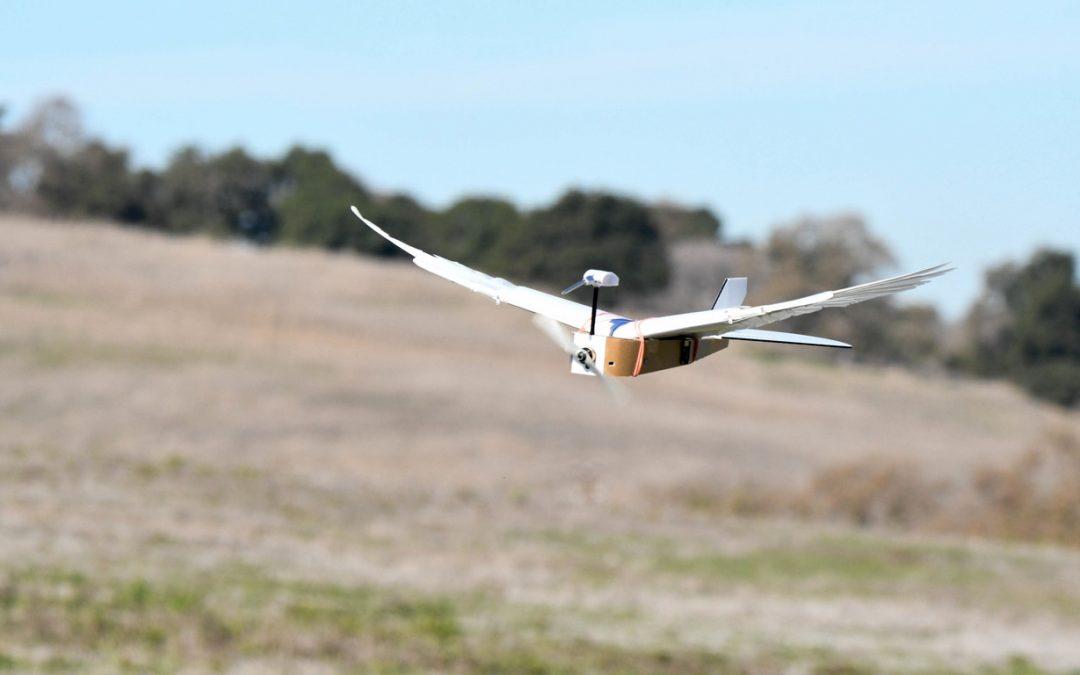 Asombrosa ave robótica con plumas reales